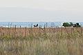 Rocky Flats refuge 001.jpg