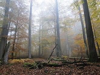 Spessart - Image: Rohrberg Nebel