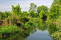 Rosava river in Kononivsky Preserve.JPG