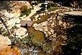 Rose garden jerusalem efi elian.jpg