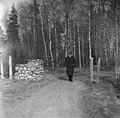 Säveltäjä lähdössä kävelylle keväisenä päivänä valkovuokkojen kukkiessa. Jean Sibelius, 1940-1945, (D2005 167 6 89) Suomen valokuvataiteen museo.jpg