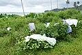 Séchage du linge près de Ribeira Peixe (São Tomé).jpg