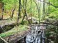 Söderåsen landscape swamp.jpg