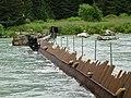 Salmon counting Haines Alaska (4334842295).jpg