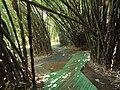 San Juan Botanical Garden - DSC07019.JPG