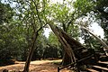 Sangkat Nokor Thum, Krong Siem Reap, Cambodia - panoramio (7).jpg