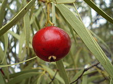 Bush Tucker Wikipedia