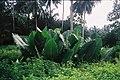 Sao Tome-Naturaleza.jpg