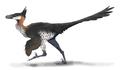 Saurornithoides restoration.png