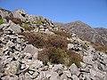 Scattered rocks at the base of Rhinog Fawr - geograph.org.uk - 1276398.jpg