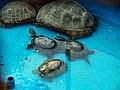 Schildkröten لاکپشت 05.jpg