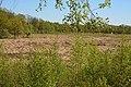Schleswig-Holstein, Borgwedel, Naturschutzgebiet Esprehmer Moor NIK 1805.jpg