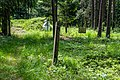 Sciklieva reserve (Belarus, June 2020) 15.jpg
