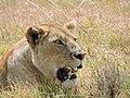 Serengeti 28 (14514198947).jpg