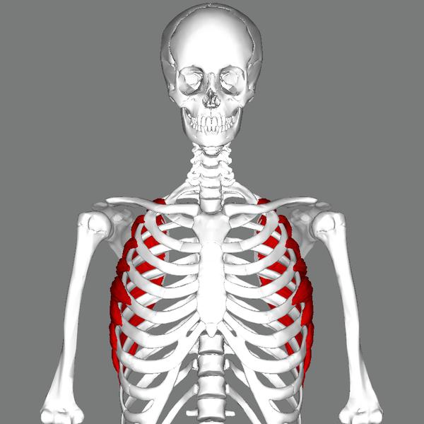 Build Serratus Anterior Muscle