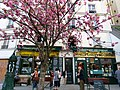 Shakespeare and Company Bookstore (17066110747).jpg