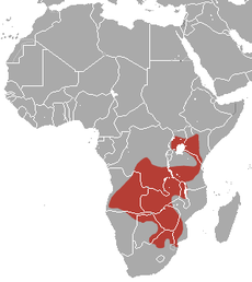 Short-snouted Elephant Shrew area.png