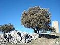 Sierra de Tiscar - 007 (30414316730).jpg