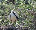 Skedstork Eurasian Spoonbill (14526008445).jpg
