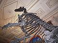 Skelettrekonstruktion Iguanodon im NHM Wien.JPG
