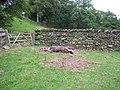 Sleeping pigs - Sandwick - geograph.org.uk - 218824.jpg