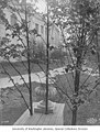 Small urn behind the Agriculture Building, as seen through some trees, Alaska-Yukon-Pacific-Exposition, Seattle, Washington, 1909 (AYP 1025).jpeg