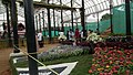 Snap from Lalbagh Flower Show Aug 2013 8391.JPG