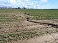 Soil erosion, Wigborough, Somerset - geograph.org.uk - 133839.jpg