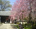 Soji-ji Nishitokyo-historical-2006-4-6.jpg