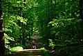 Sommerwald - panoramio.jpg