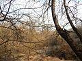 Sovetskiy rayon, Bryansk, Bryanskaya oblast', Russia - panoramio (209).jpg
