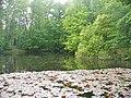 Spandau-Johannesstift - Karpfenteich (Carp Pond) - geo.hlipp.de - 37295.jpg