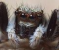 Spider (14425430519).jpg