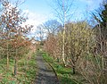 Spinners Wood, Ravensmoor - geograph.org.uk - 344569.jpg