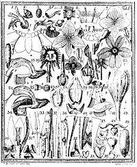 Das entdeckte Geheimnis der Natur im Bau und in der Befruchtung der Blumen cover