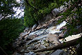 Spring-blackwater-river-wv - West Virginia - ForestWander.jpg