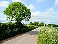 Spring roadside - geograph.org.uk - 1297693.jpg