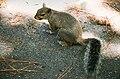 Squirrel at Taylor Lake 0808260021.jpg