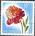 Stamp of Albania - 1967 - Colnect 136610 - Chinese Peony Paeonia lactiflora.jpeg