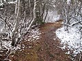 Stanhope Beach Trail, National Park, PEI (15881286659).jpg