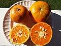 Starr-131204-2678-Citrus reticulata-Clementine on left Honey on right-Hawea Pl Olinda-Maui (25228295305).jpg