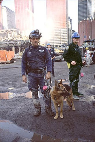 Search and rescue dog - SAR German Shepherd dog at World Trade Center after the September 11 attacks