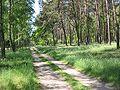 Stepenitz Wald.JPG