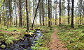Stream in forest 2.jpg