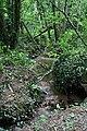 Stream through Woodland - geograph.org.uk - 219869.jpg