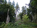 Studley Royal - New Trees for Old - geograph.org.uk - 1006260.jpg
