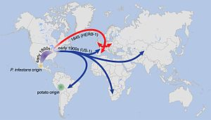 Great Famine (Ireland) - Suggested paths of migration and diversification of P. infestans lineages HERB-1 and US-1