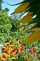 Summer flowers (6147184919).jpg