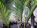 Sundarban (11).jpg