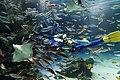 Sunshine Aquarium 3-22 (26381159745).jpg